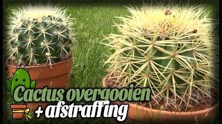 Cactus overgooien + Afstraffing! - HetGamePortaal