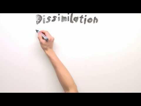 DISSIMILATION BIOLOGIE EPUB