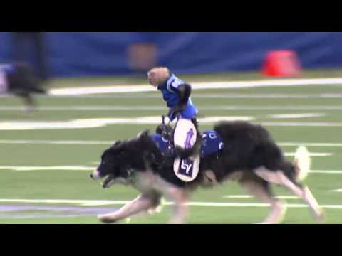 monkey riding a dog colts style