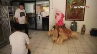 Download Video Sate anjing kesian... MP3 3GP MP4