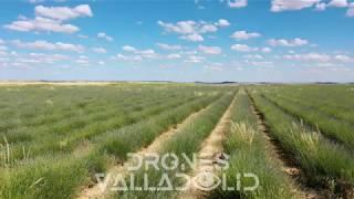 Campos de Lavanda - Drones Valladolid