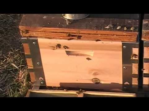 Eco Bee Box - hiving packages with new equipment