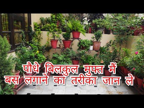 ⛈️☔️फ्री मैं बनाए पौधे कटिंग से इस monsoon, बिना किसी रूटिंग हार्मोन आसानी से चलने वाले पौधे🌱🌳