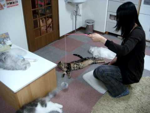 猫のまほう@五反田1