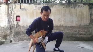 CÁCH HUẤN LUYỆN CHÓ ĐI VŠ ĐÚNG CHỖ | HĻV Thiếu tá Hà Xuân Hoàng
