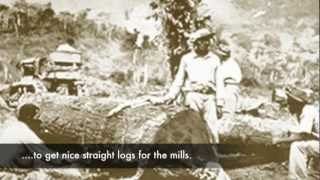 Treasure Found - Long Lost Logs from Belize