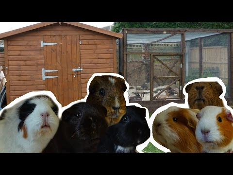 Guinea Pig Home Tour | January 2017