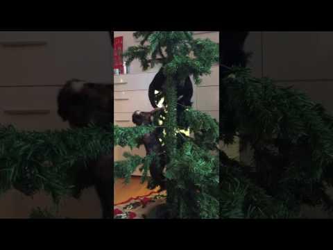 Roliga katter - Sally jagar Blixtens svans i julgranen