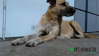 Как живут известные омские собаки Мишаня и Халява