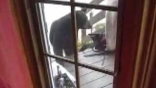 Кот против медведя! / Cat vs. Bear