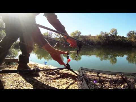 River Carp Fishing With Ebro Sporting Adventures In Catalonia, Spain