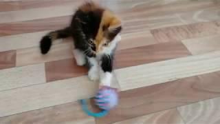 Как ухаживать за котенком   моя история   мой котенок   товары для животных