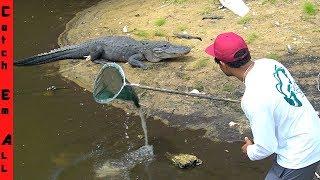 SAVING FISH in GATOR HOLE! **Gator Nest**