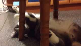 Релаксирующий подмигивающий кот