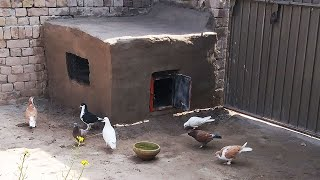 How to make a Pigeon,s house with bricks and cows