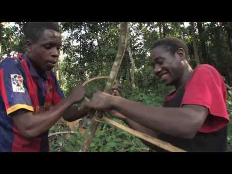 Part 1 - Introduction to Baka communities living around Dja Reserve.mov