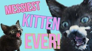 meet-deep-dish-the-messiest-kitten-ever