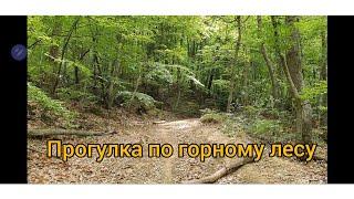 Горный лес в Крыму