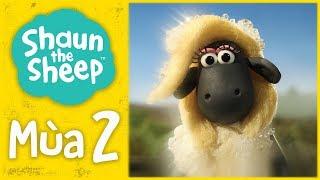 Bạn cùng của cả hai | Mùa 2 Tập đầy đủ | Những Chú Cừu Thông Minh