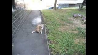 Cat ran away! Рыжий кот скрылся!!!
