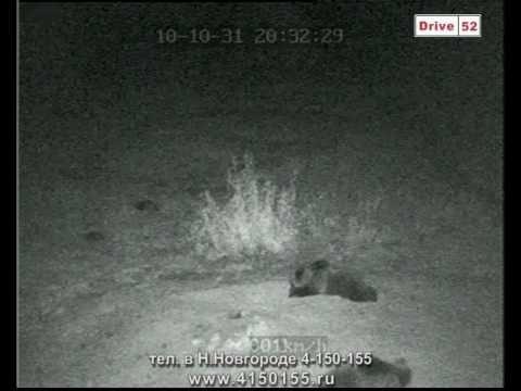 Съемка животных камера JMK JK 512 и видеорегистратор JY SD 401