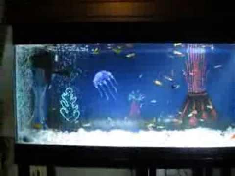 Trang trí hồ cá.Fiber optic aquarium background.