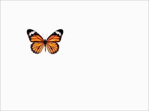percepción-visual-.-persistencia-visual.-ilusión-óptica.-sensación-de-movimiento