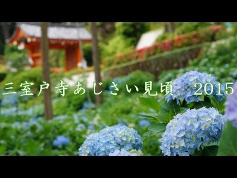 紫陽花の季節も日本の魅力だ。