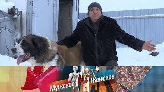Мужское / Женское - Осторожно, злая собака. Выпуск от 12.04.2018
