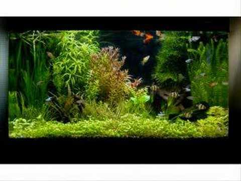 Une belle selection d 39 aquarium youtube for Aquarium vase pour poisson rouge