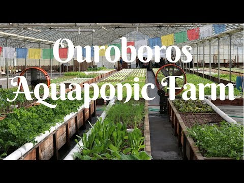 Visiting the best AQUAPONIC FARM in California