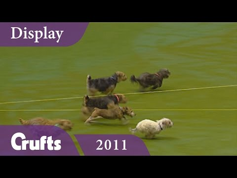 Tricky Tykes Display Team Cause Havoc at Crufts 2011 | Crufts Dog Show