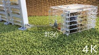 Формикарий сделанный на 3D принтере. Переселение муравьев Camponotus nicobarensis