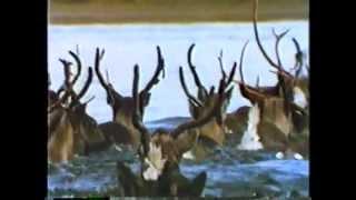 Repeat youtube video Vida Selvagem - Alyeska: Extensos Desertos do Alaska - Parte 3 / 3