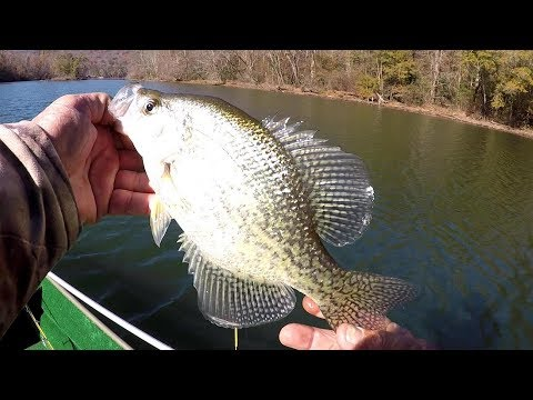Crappie Fishing In Clear Water - Does Hi Vis Line Affect Crappie?
