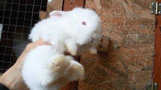 Просто маленькие крольчатки