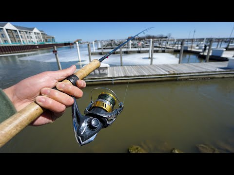 Fishing URBAN Docks For HARBOR Fish!