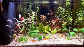 Amtra sistem led 60l aquarium
