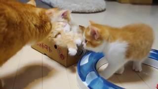 Кошка мама обнимает своих котят)