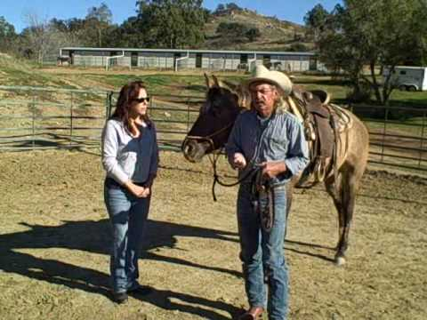 bella the explosive horse , David Lee Archer