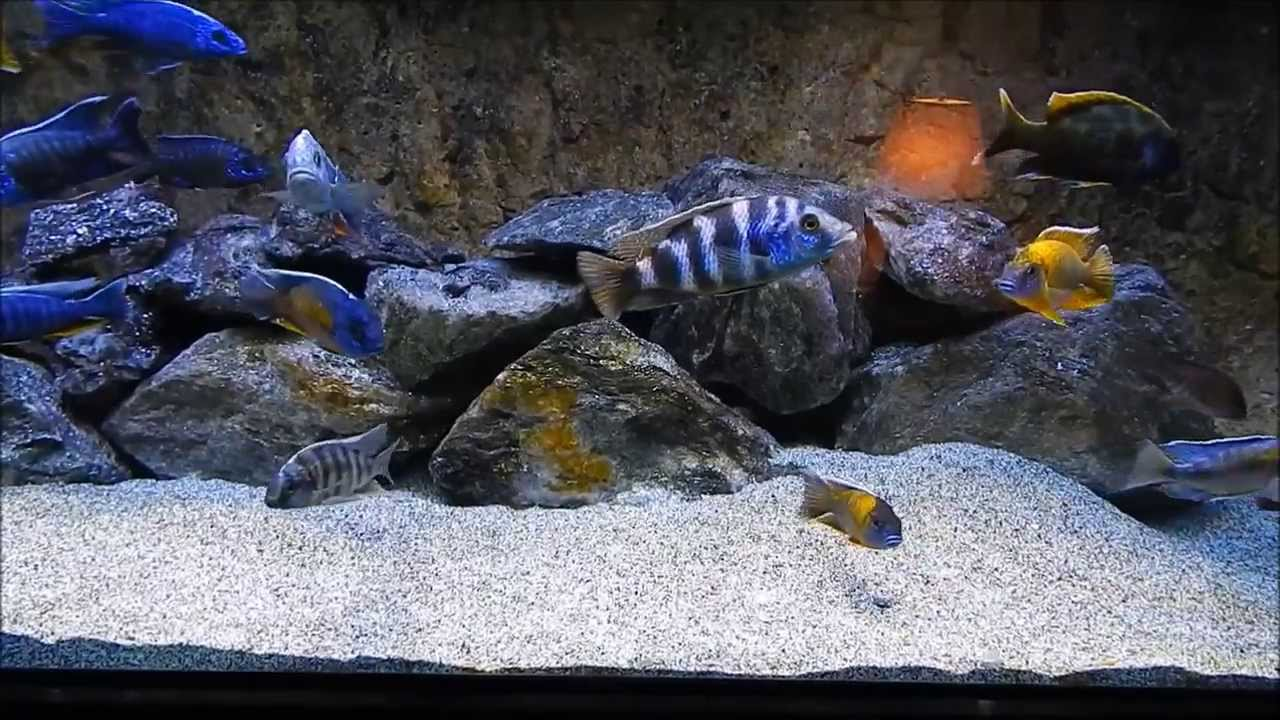 how to keep your tank water clear