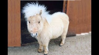 Cute and funny fail horse video compilation | Soo cute #2