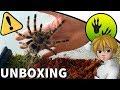 Une Mygale dans mon Colis ! - Unboxing