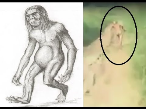 Possible Humanoid Cryptid Sighting In Sumatra Indonesia ORANG PENDEK HOBBIT