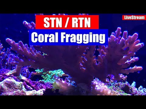 Every Reefers worst nightmare and how to deal with it! STN / RTN and Coral Fraggin!