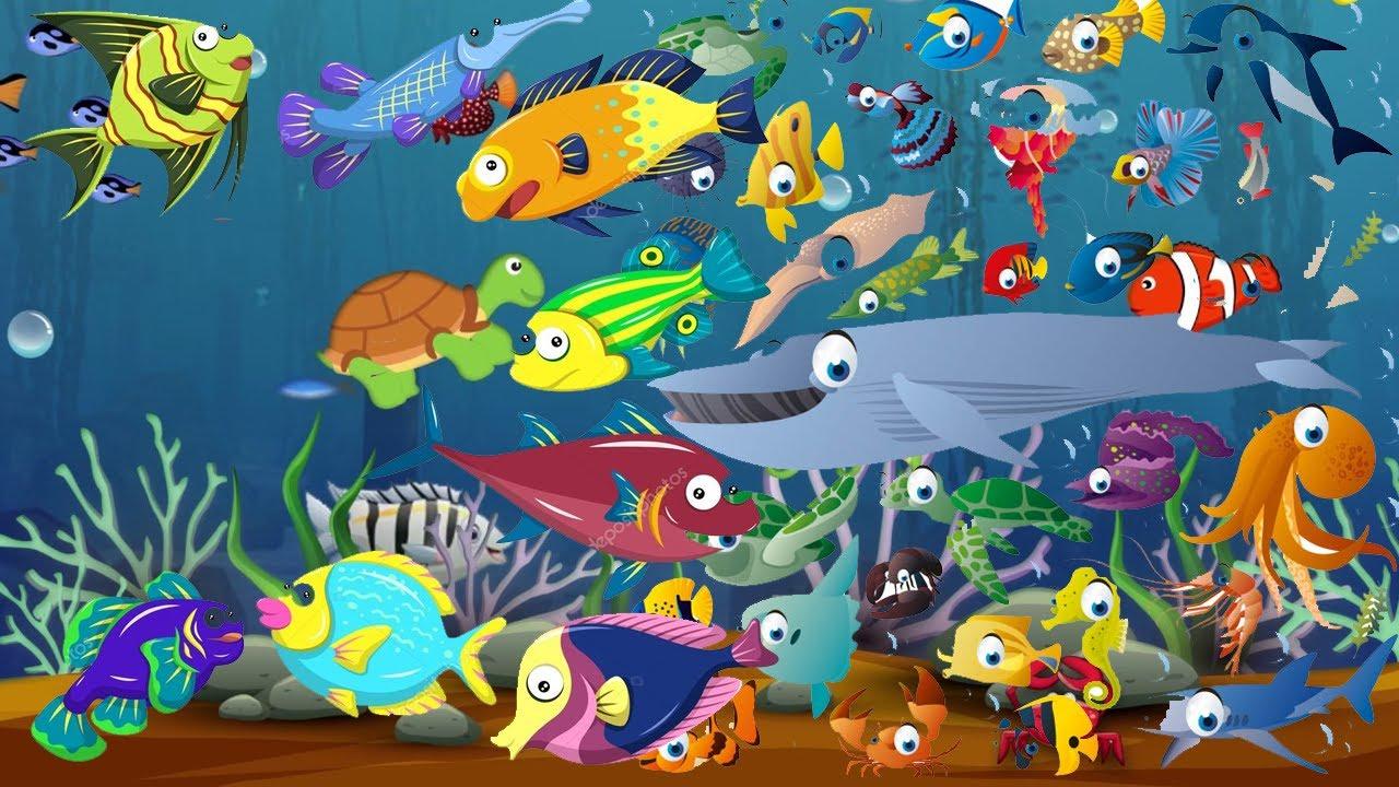 Eglenceli Deniz Canlilarini Ogreniyorum Baliklari Ogreniyorum