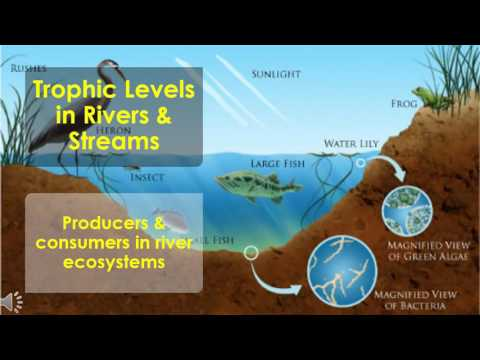 Community Ecology for Rivers & Streams