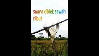 Download Mp3 Ciblek Sawah Ribut Andalan Ngebolang Jitu