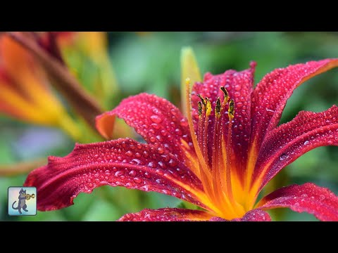 Beautiful Flowers ~ Planet Earth Amazing Nature Scenery & The Best Relax Music • 3 HOURS