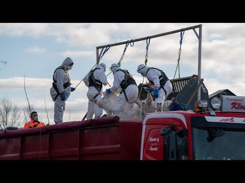 06.03.21 Udbrud af fugleinfluenza: 4000 kalkuner aflivet